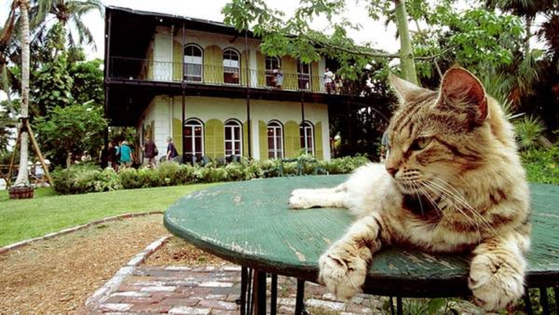 Los gatos de 7 dedos en la casa de Hemingway