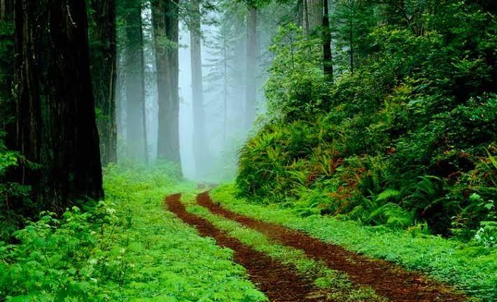Parque Nacional Redwood 1